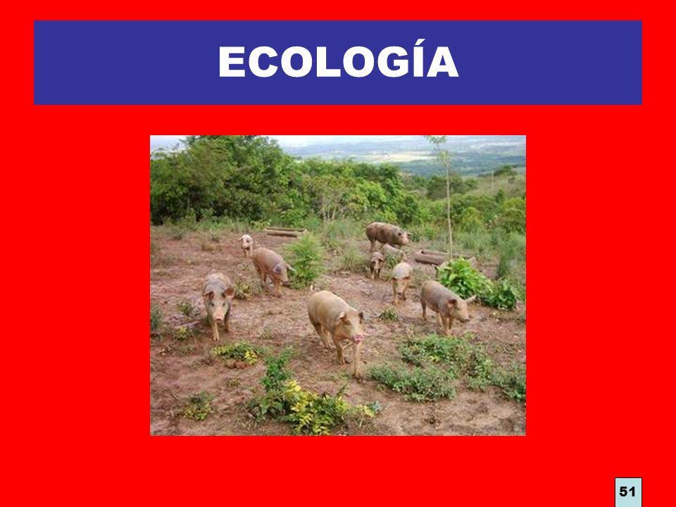 ECOLOGÍA 51