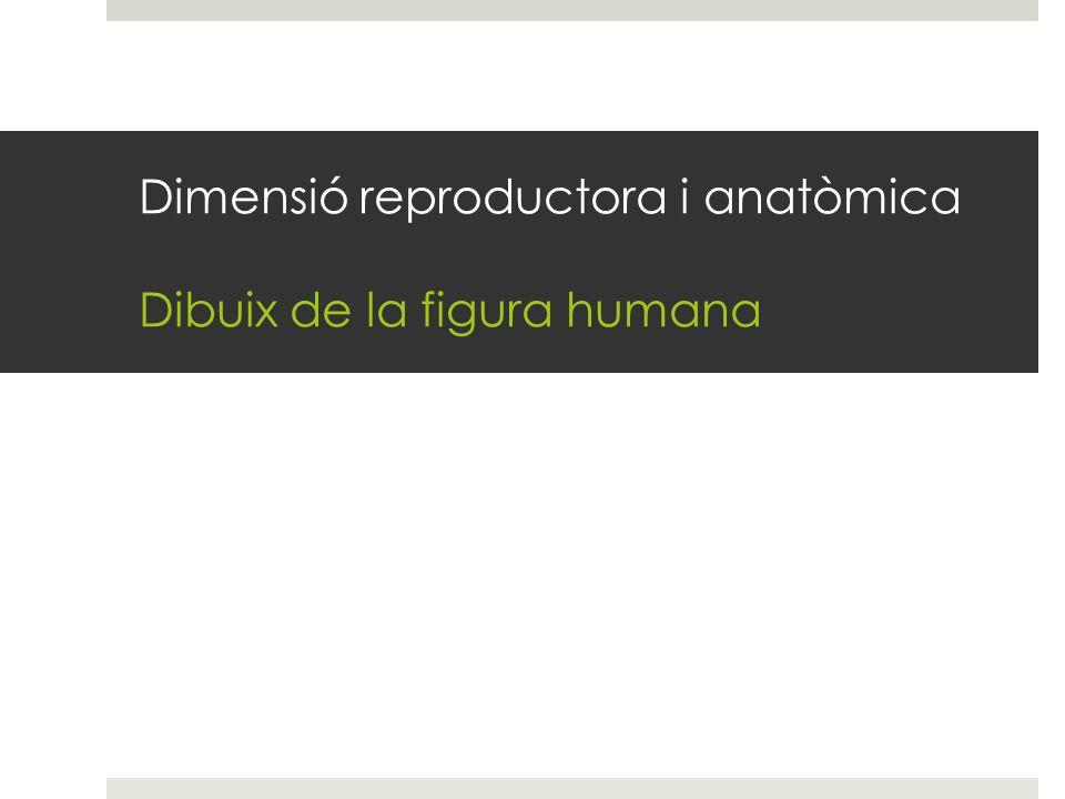 Dimensió reproductora i anatòmica Dibuix de la figura humana