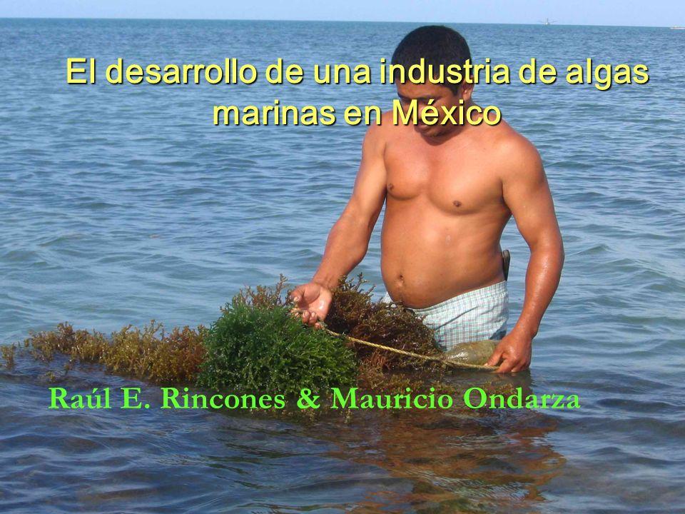 El desarrollo de una industria de algas marinas en México