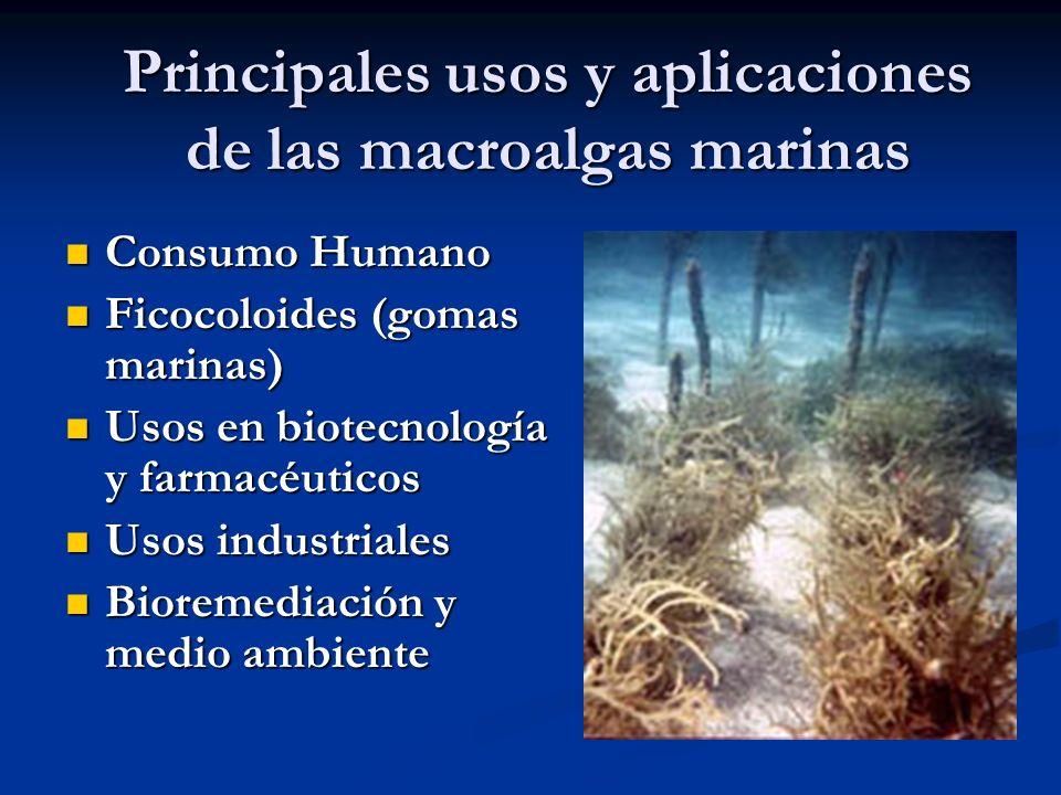 Principales usos y aplicaciones de las macroalgas marinas