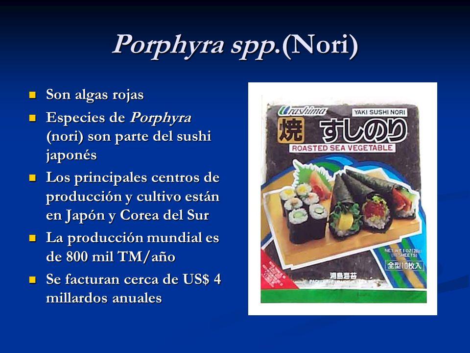 Porphyra spp.(Nori) Son algas rojas