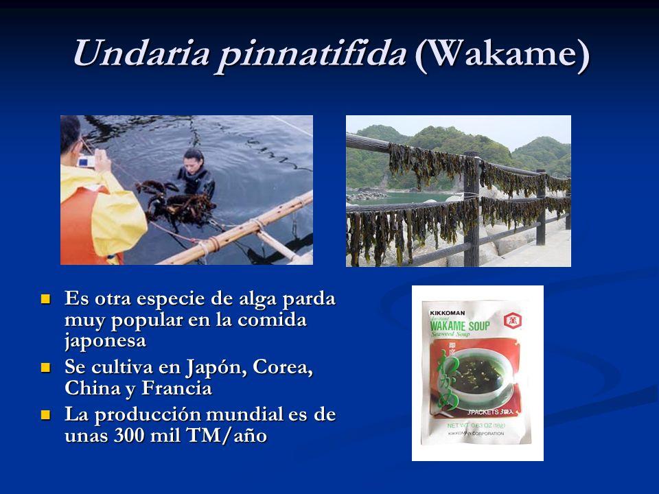 Undaria pinnatifida (Wakame)