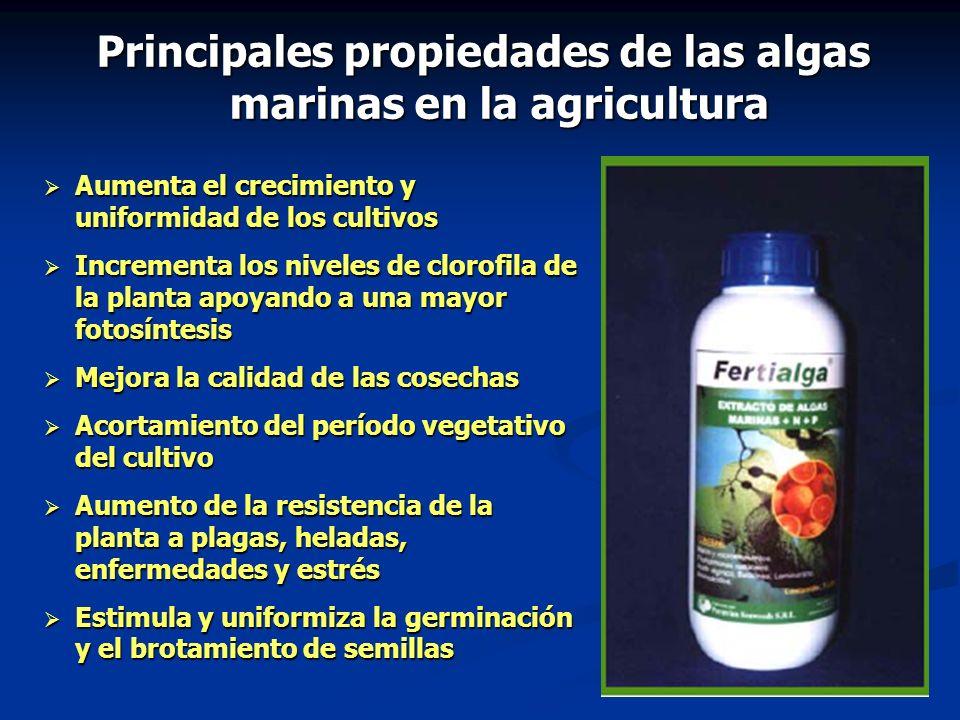Principales propiedades de las algas marinas en la agricultura
