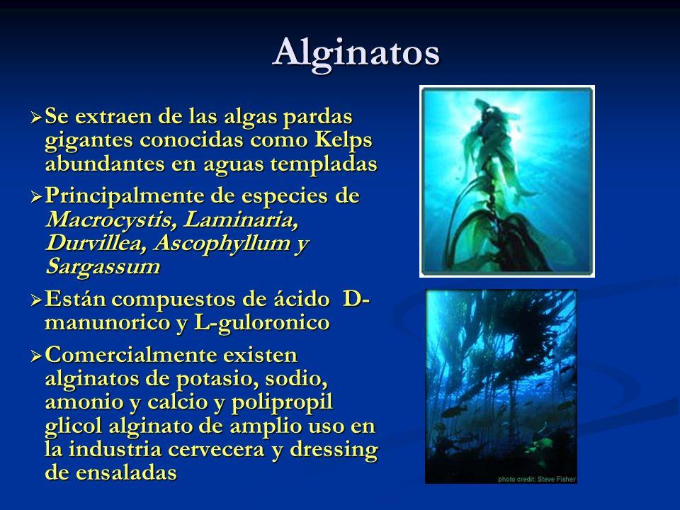 Alginatos Se extraen de las algas pardas gigantes conocidas como Kelps abundantes en aguas templadas.
