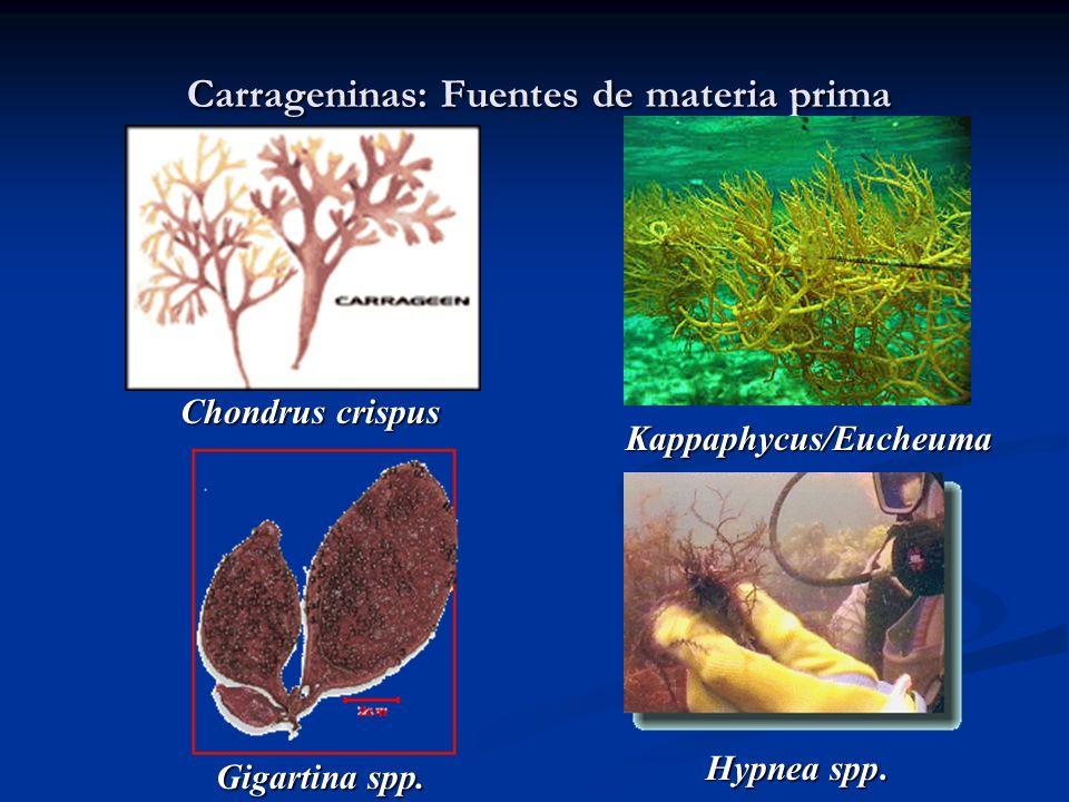 Carrageninas: Fuentes de materia prima