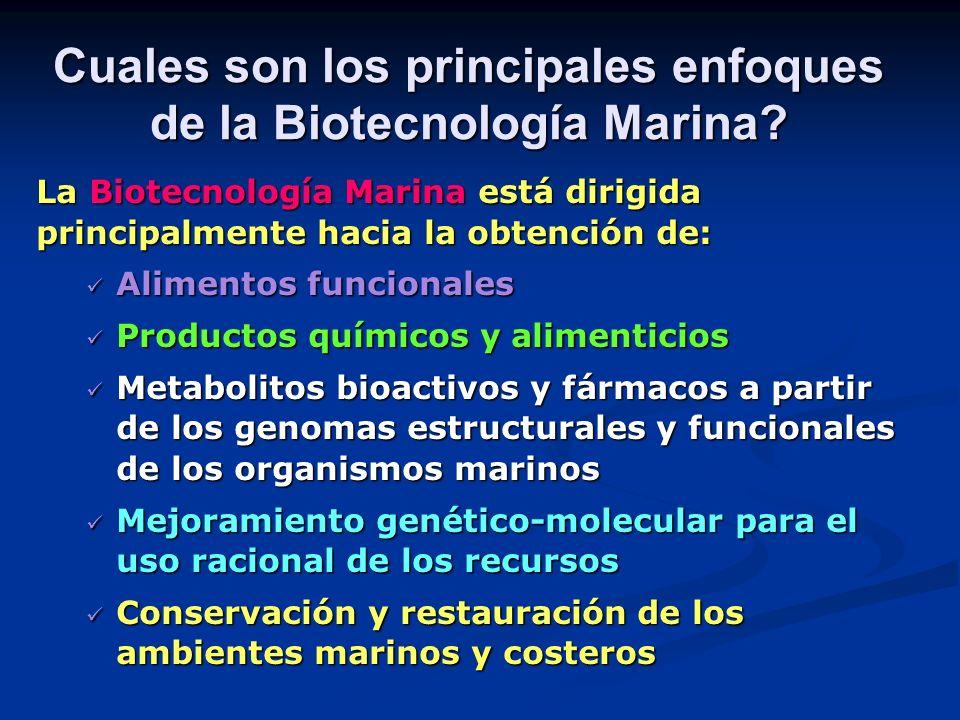 Cuales son los principales enfoques de la Biotecnología Marina