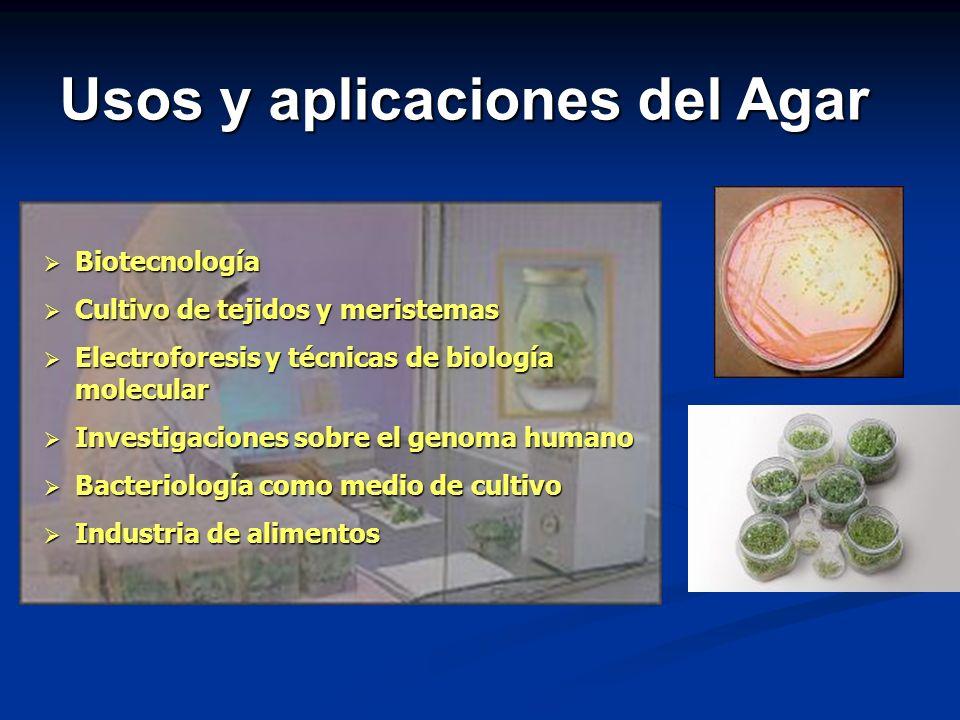 Usos y aplicaciones del Agar