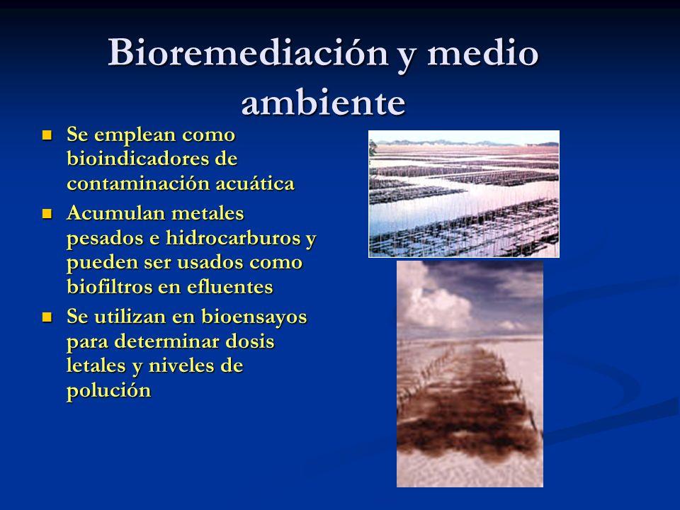 Bioremediación y medio ambiente