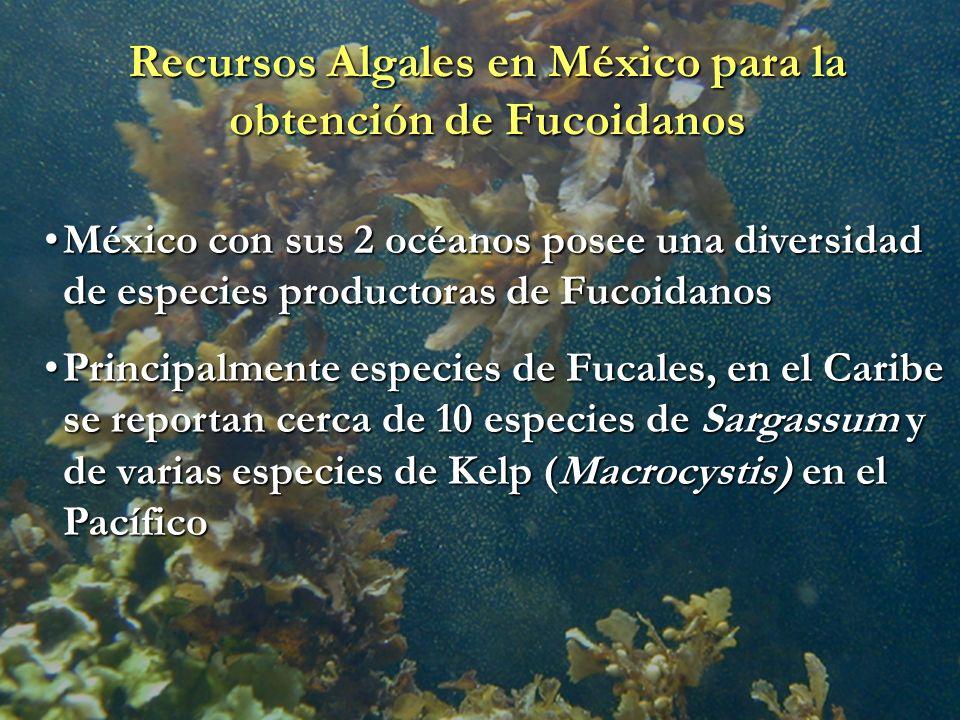 Recursos Algales en México para la obtención de Fucoidanos