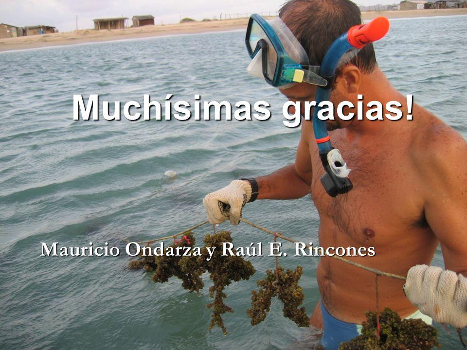 Muchísimas gracias! Mauricio Ondarza y Raúl E. Rincones