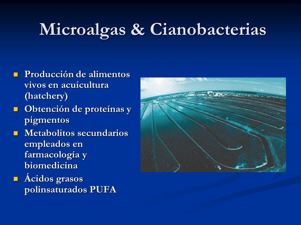 Microalgas & Cianobacterias