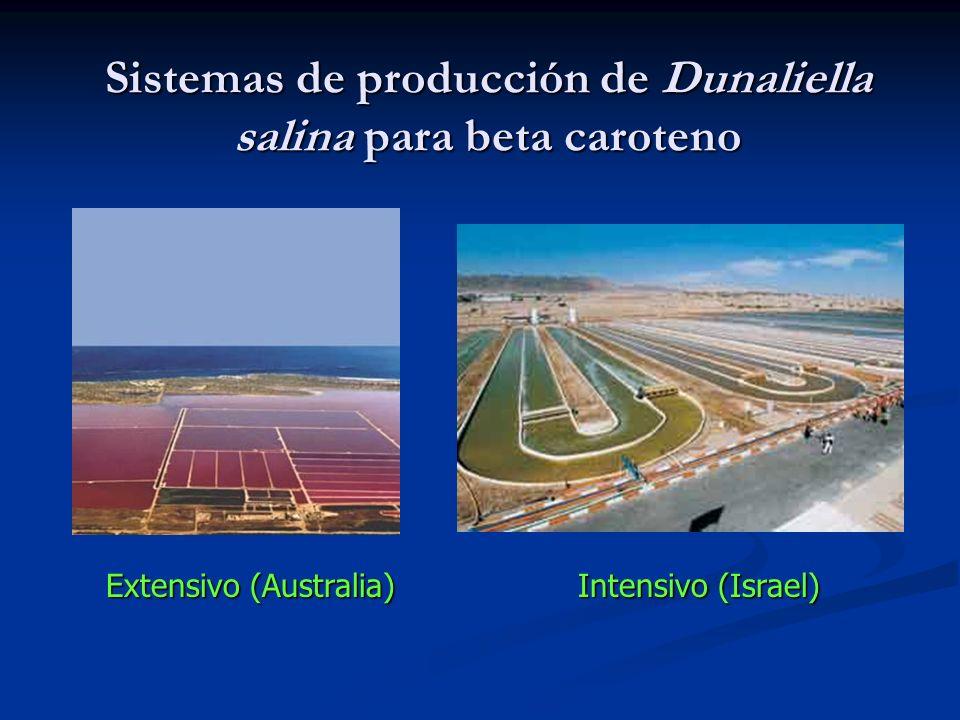 Sistemas de producción de Dunaliella salina para beta caroteno