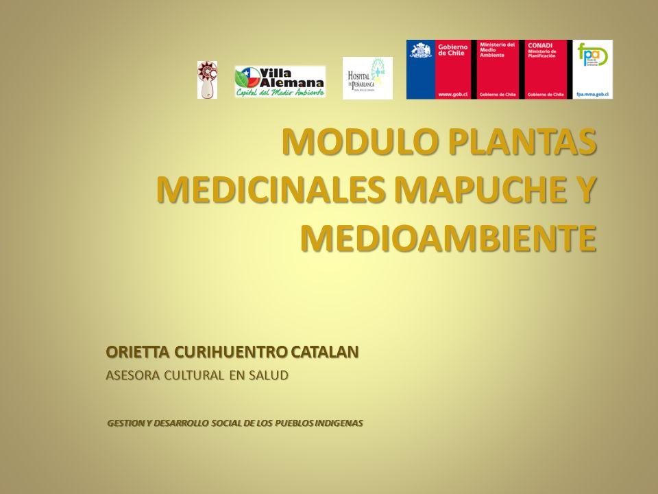 MODULO PLANTAS MEDICINALES MAPUCHE Y MEDIOAMBIENTE
