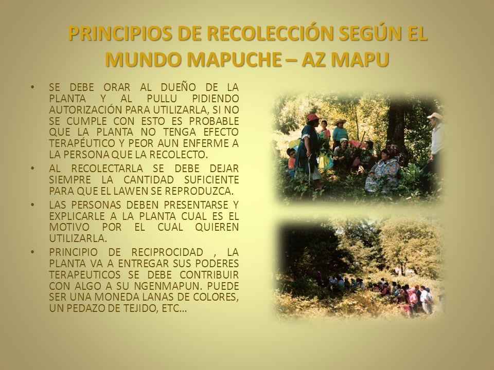 PRINCIPIOS DE RECOLECCIÓN SEGÚN EL MUNDO MAPUCHE – AZ MAPU