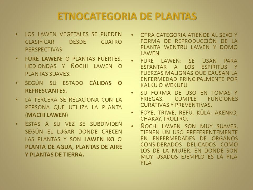 ETNOCATEGORIA DE PLANTAS