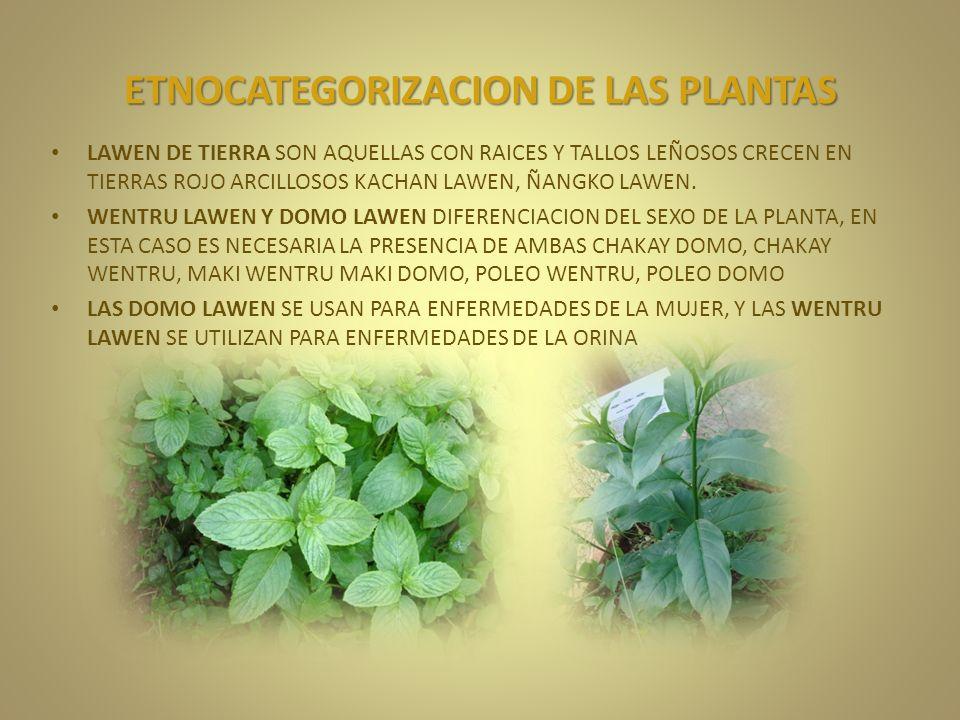 ETNOCATEGORIZACION DE LAS PLANTAS