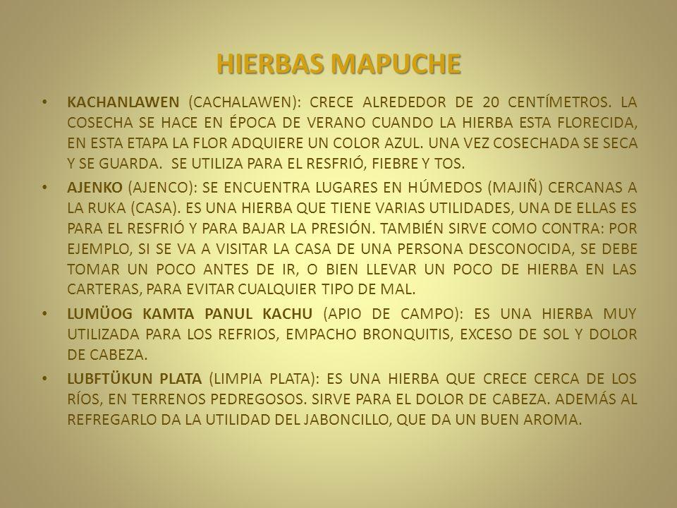 HIERBAS MAPUCHE