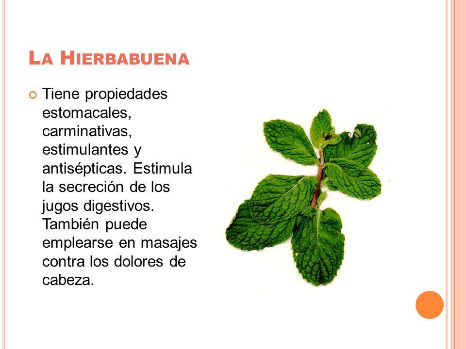 La Hierbabuena