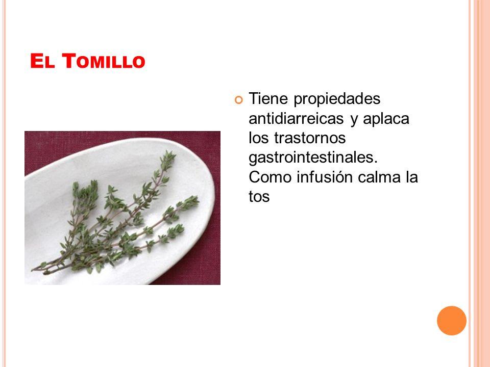 El Tomillo Tiene propiedades antidiarreicas y aplaca los trastornos gastrointestinales.