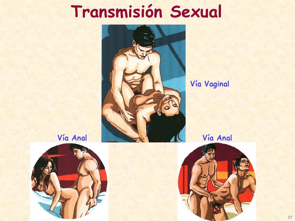 Transmisión Sexual Vía Vaginal Vía Anal Vía Anal 15
