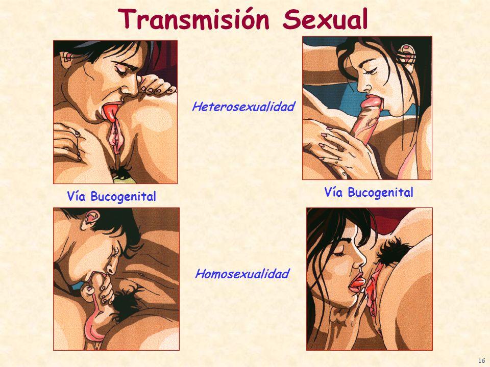 Transmisión Sexual Heterosexualidad Vía Bucogenital Vía Bucogenital