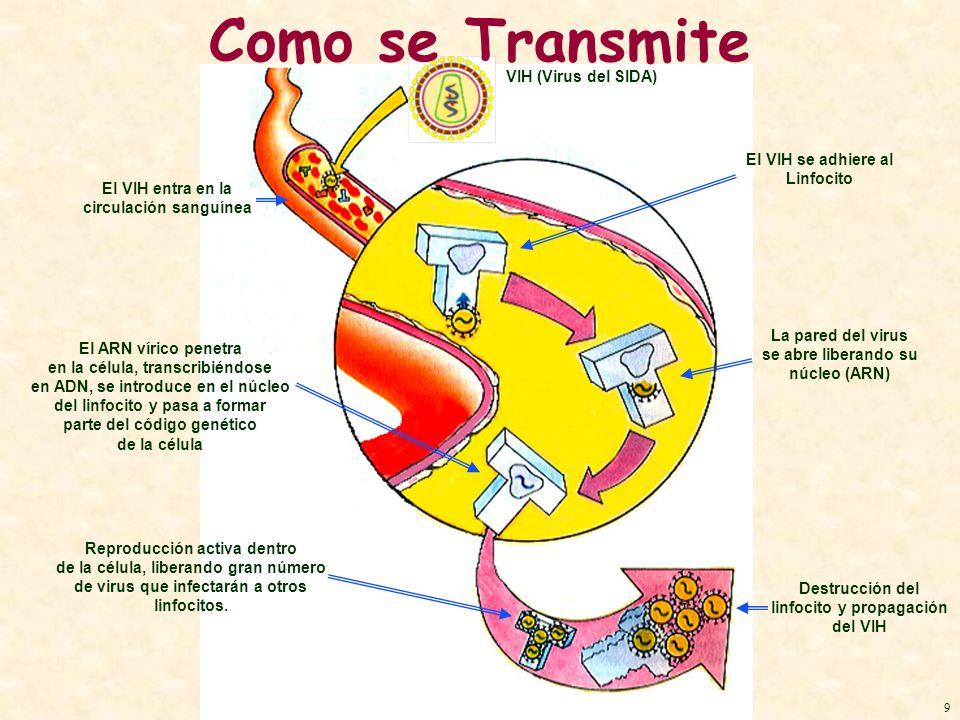 Como se Transmite VIH (Virus del SIDA) El VIH se adhiere al Linfocito