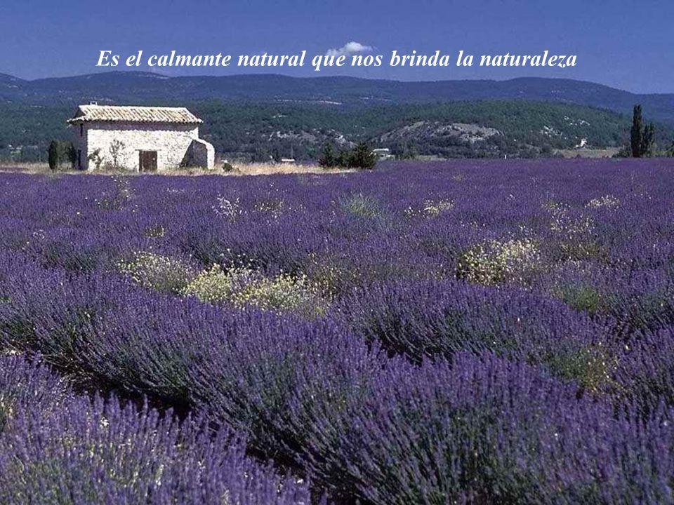 Es el calmante natural que nos brinda la naturaleza