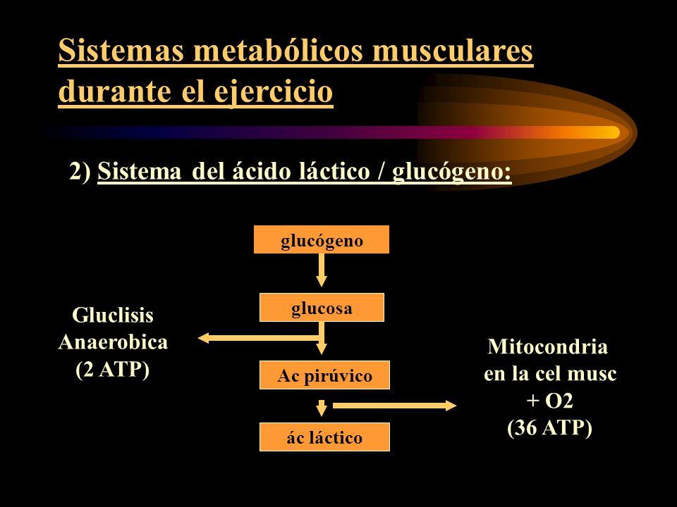 Sistemas metabólicos musculares durante el ejercicio