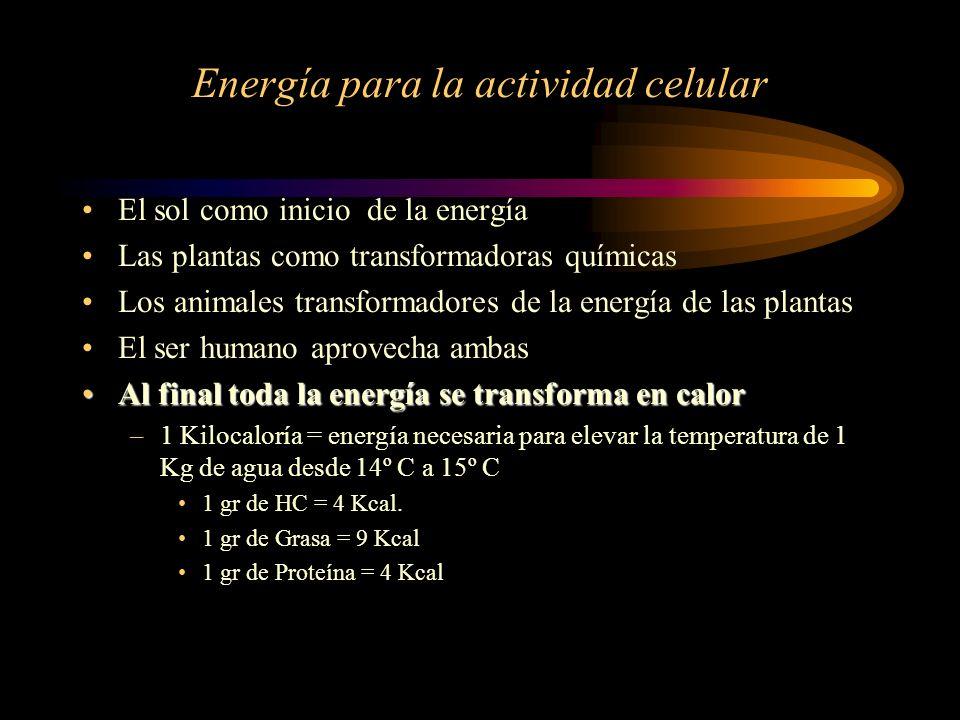 Energía para la actividad celular