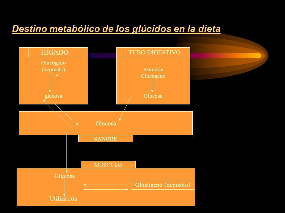 Destino metabólico de los glúcidos en la dieta