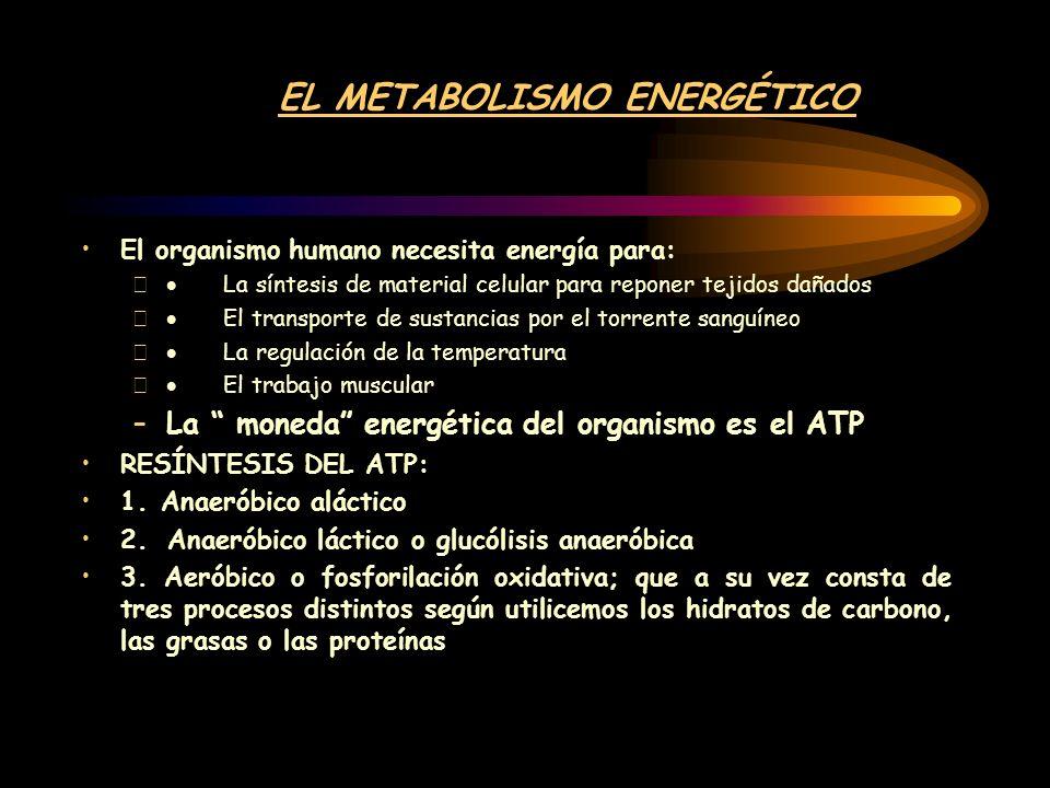 EL METABOLISMO ENERGÉTICO