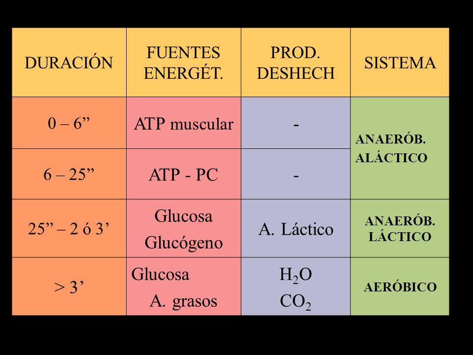 ATP muscular - ATP - PC Glucosa Glucógeno A. Láctico > 3' A. grasos