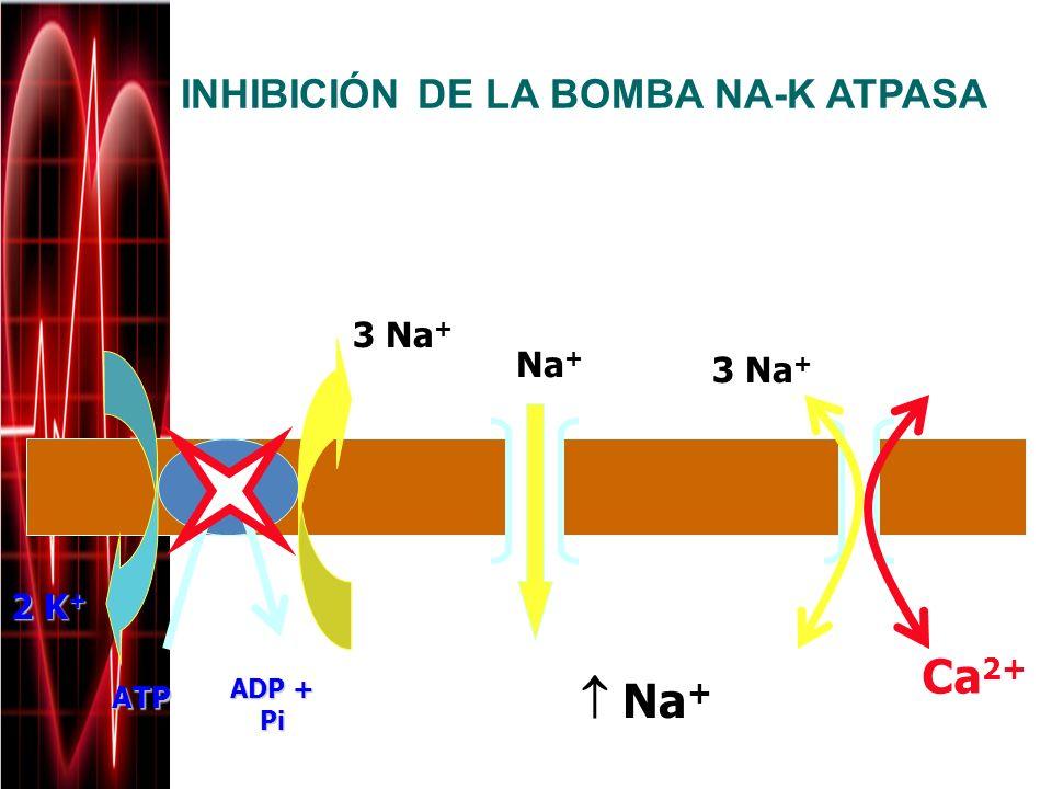 Ca2+  Na+ INHIBICIÓN DE LA BOMBA NA-K ATPASA Extracelular 3 Na+ Na+
