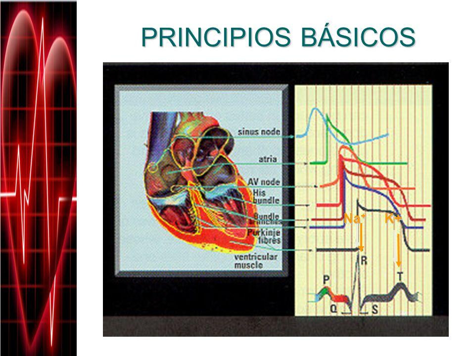 PRINCIPIOS BÁSICOS Na+ K+
