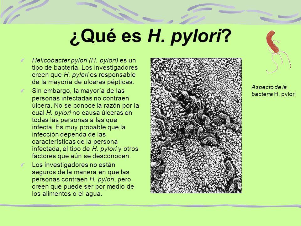 ¿Qué es H. pylori