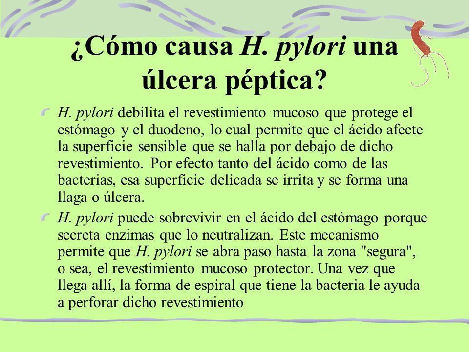 ¿Cómo causa H. pylori una úlcera péptica