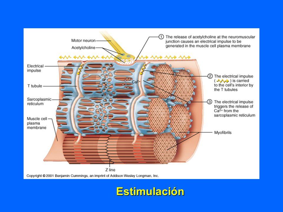 Estimulación