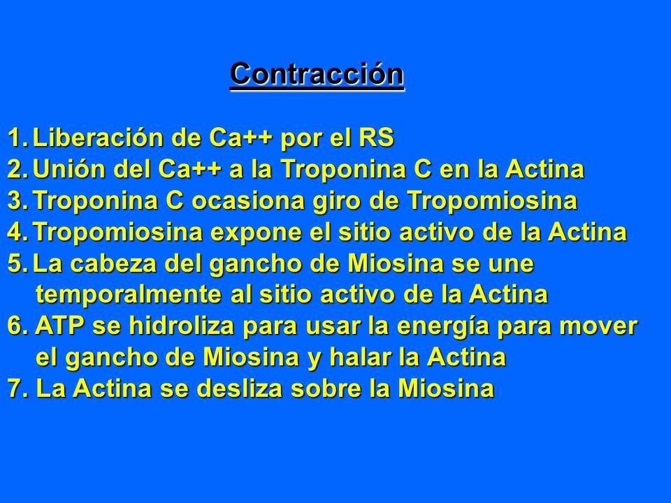 Contracción Liberación de Ca++ por el RS
