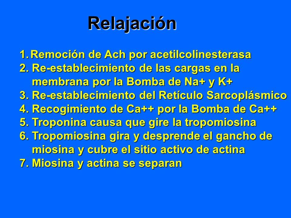 Relajación Remoción de Ach por acetilcolinesterasa