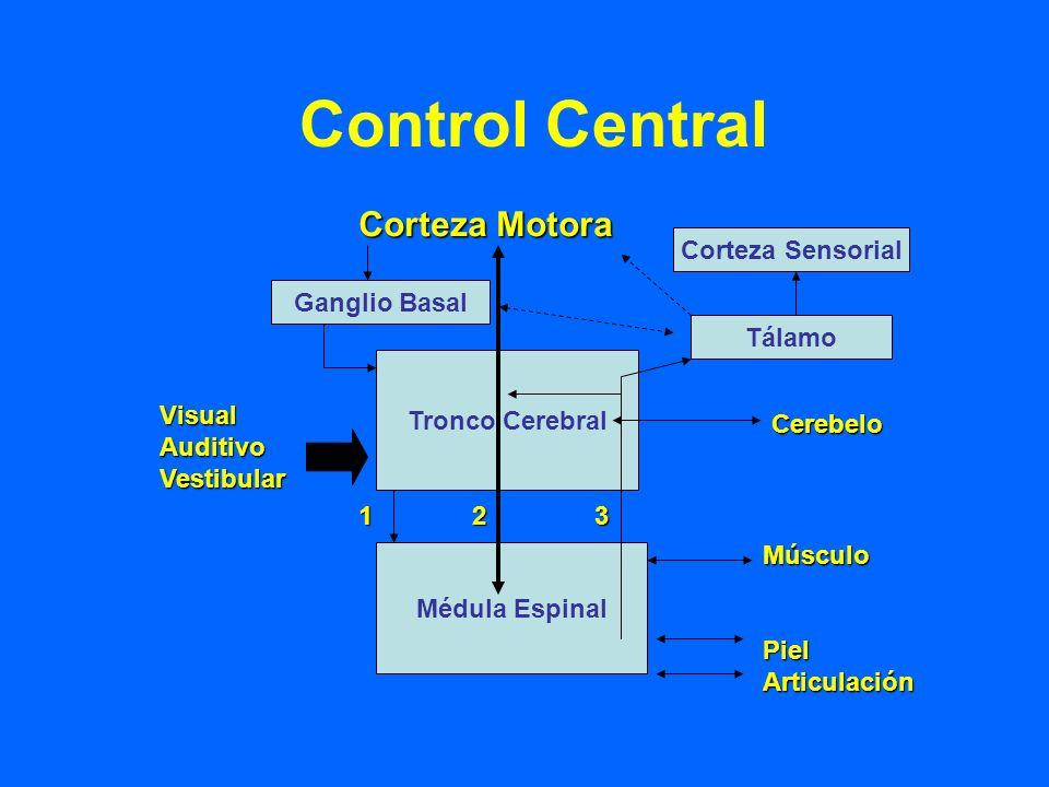 Control Central Corteza Motora Corteza Sensorial Ganglio Basal Tálamo