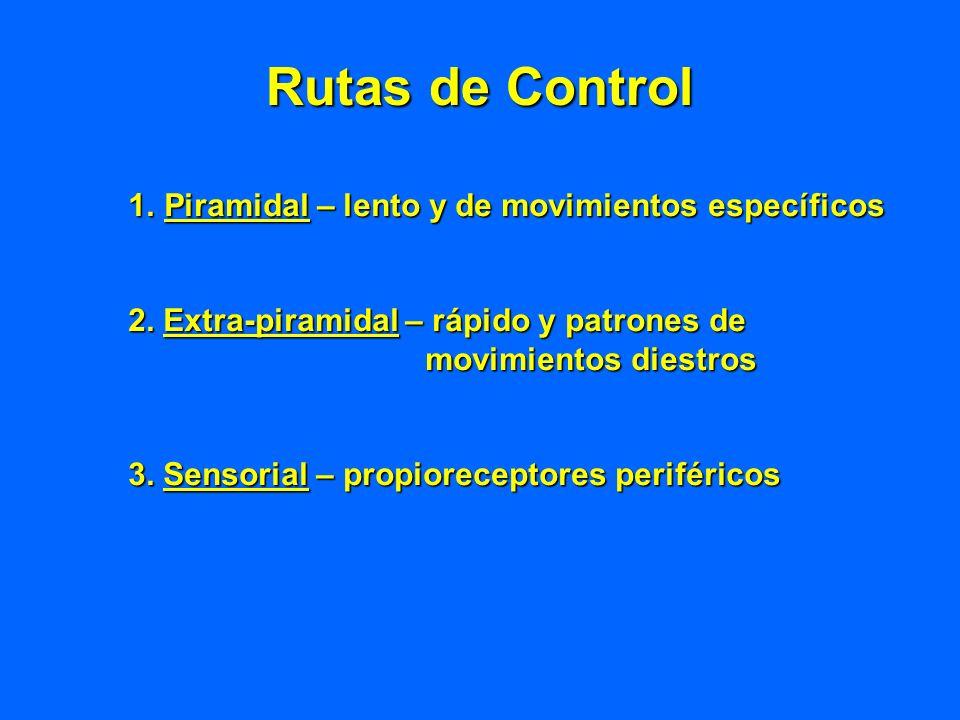 Rutas de Control Piramidal – lento y de movimientos específicos