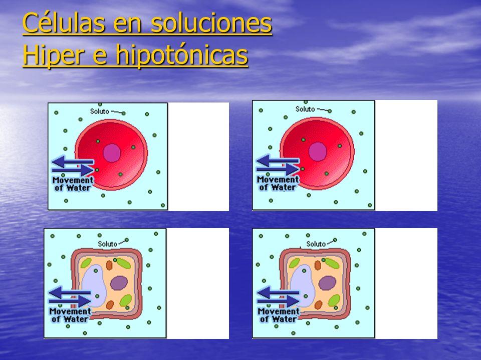 Células en soluciones Hiper e hipotónicas