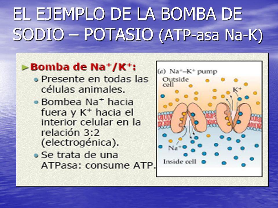 EL EJEMPLO DE LA BOMBA DE SODIO – POTASIO (ATP-asa Na-K)