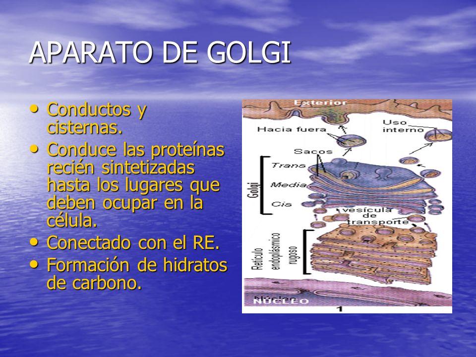 APARATO DE GOLGI Conductos y cisternas.