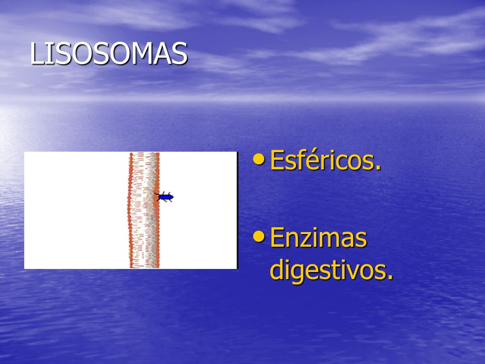 LISOSOMAS Esféricos. Enzimas digestivos.