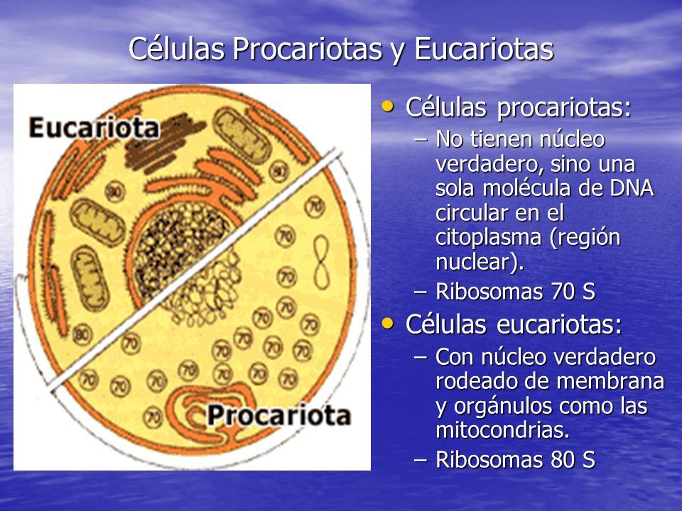 Células Procariotas y Eucariotas