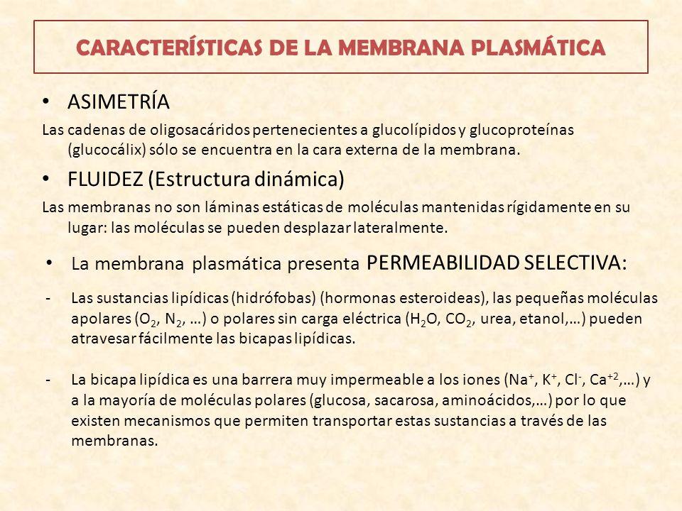 CARACTERÍSTICAS DE LA MEMBRANA PLASMÁTICA