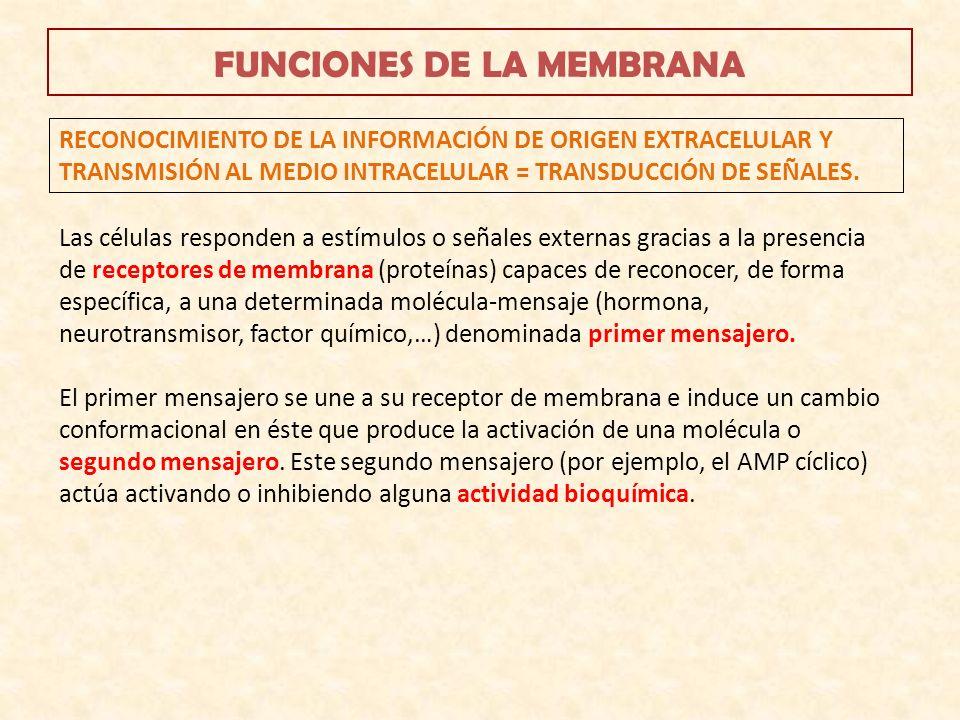 FUNCIONES DE LA MEMBRANA