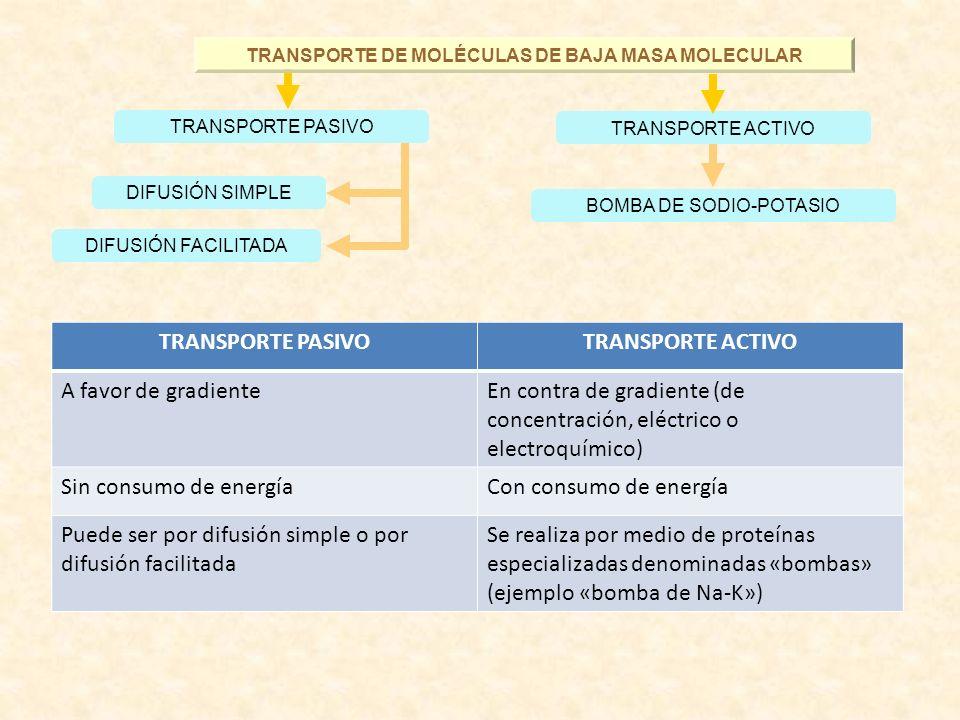 TRANSPORTE DE MOLÉCULAS DE BAJA MASA MOLECULAR