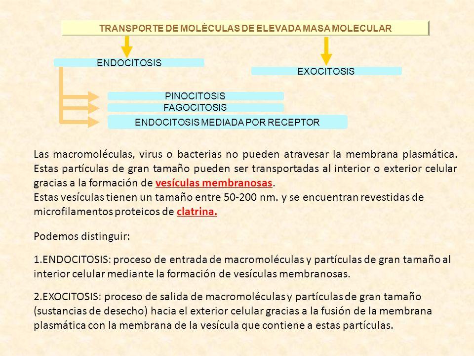 TRANSPORTE DE MOLÉCULAS DE ELEVADA MASA MOLECULAR